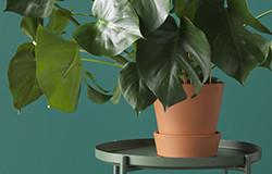 Растения и кашпо