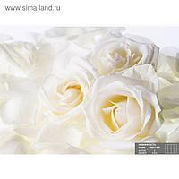 Фотообои К-011 «Невинность» (8 листов), 280 × 200 см
