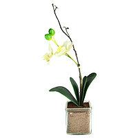 Декор орхидея SHAHANNA