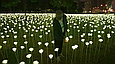 Светодиодные уличные Тюльпаны(20 цветов), желтые, розовые, красные, фото 10