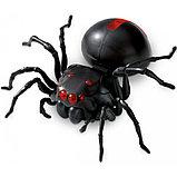 Конструктор-паук на соленой воде, фото 2