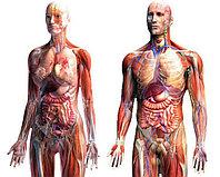 Лечение органов человека