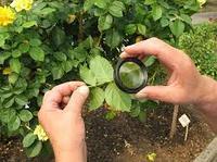 О питании и защите растений