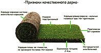 Укладка готового газона