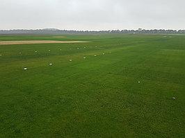 Выращивание рулонного газона на полях наших клиентов