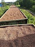 Керамзитовый гравий 10-40, фото 4