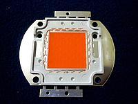 Светодиод BridgeLux для растений матрица 50W полного спектра, фото 1