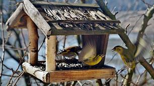Кормушки для птиц