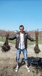 Сергей (чей голос вы всегда слышите в телефоне), демонстрирует качество посадочного материала (Полька)