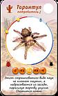 Настольная игра: Терраформер, фото 8