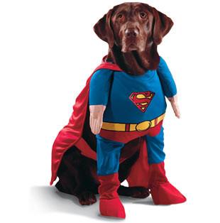 Одежда для домашних животных