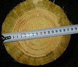Деревянные опоры ЛЭП, деревянные столбы для линий электропередач (ЛЭП) и связи, фото 2