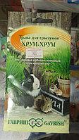 Овёс. Трава для домашних животных.