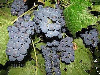 Саженец виноград Молдова