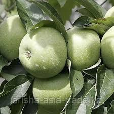 Саженец яблони Ренет Симиренко ММ 106