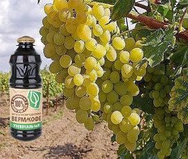 """Способно ли удобрение """"ВермиКофе"""" повысить урожай винограда?"""
