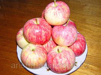 Саженец яблони Пеструшка ММ 106