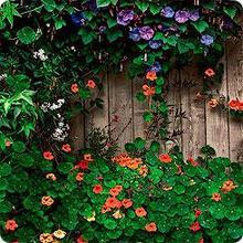 """Смесь цветов """"Цветущая изгородь""""0,05 кгЗеленый ковер"""