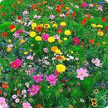 """Смесь """"Многолетние цветы""""0,05 кг Зеленый ковер"""