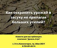 Как сохранить урожай в засуху не прилагая больших усилий?