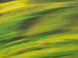 Витражная пленка с эффектом цветных разводов Rio (Тропический лес)
