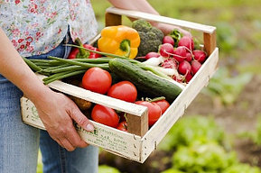 Успешные агротехнологии всегда находятся на стыке науки и природы