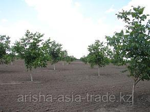 Приблизительный расчет механизированных работ по закладке любого плодового сада (семечковые, косточковые) 1 га