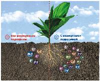 Природное питание растений