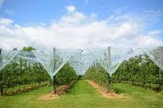 Технологические карты Программа, технология выращивания семечковых, косточковых садов, промышленного
