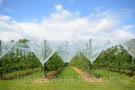 Технологическая карта яблоневый сад вегетационный период с 1 по 4 год включительно