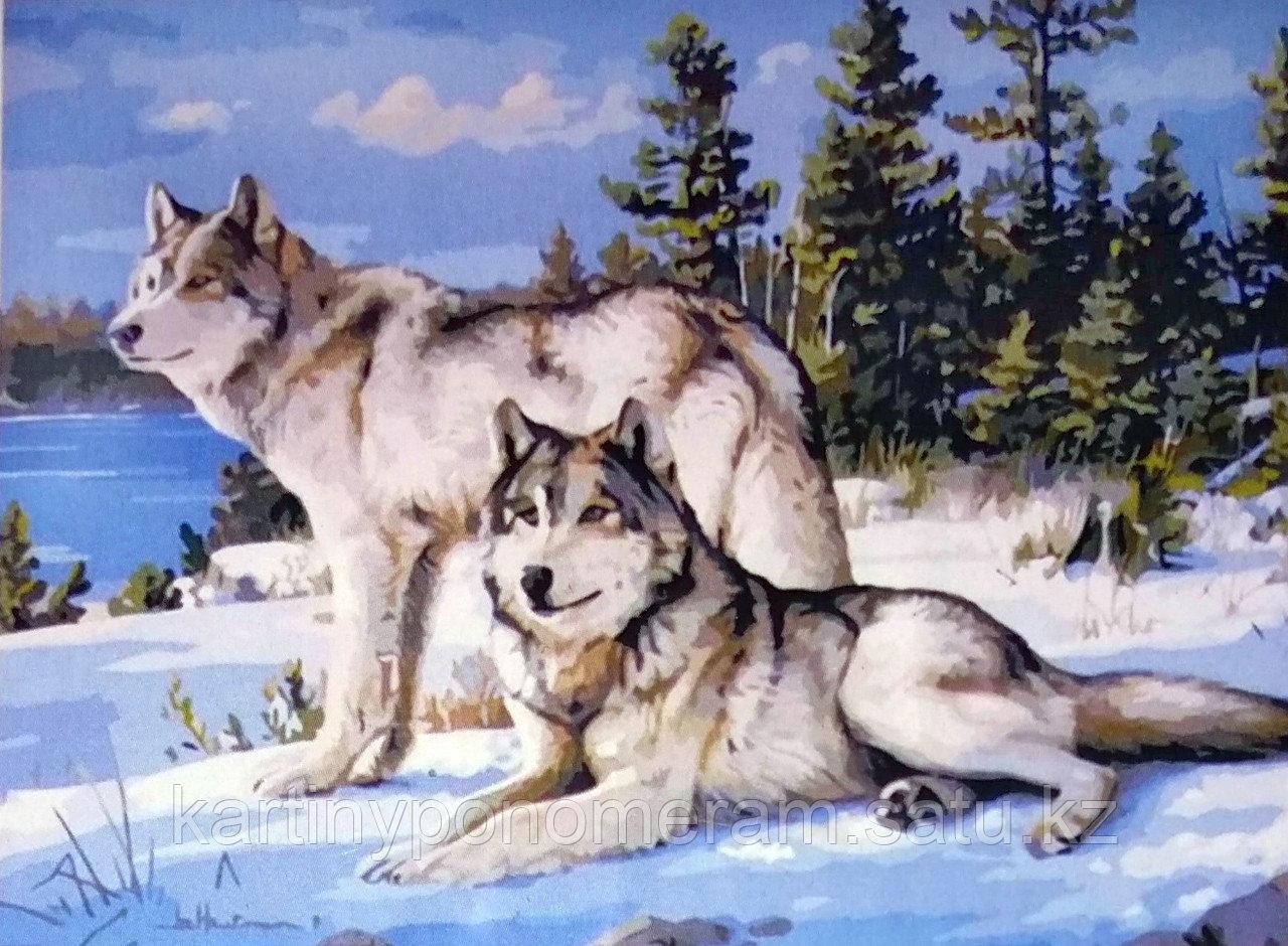 """Картины по номерам """"Волк с волчицей 30х40"""""""