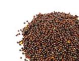 Горчичное семя коричневое брикет 1кг