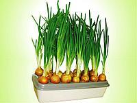 """Домашняя установка для выращивания зеленого лука """"Луковое счастье"""""""