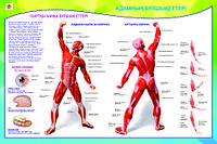 Плакаты Анатомия человека, фото 1