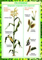 Плакаты Ботаника