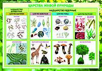 Плакаты общее знакомство с цветковыми растениями, фото 1