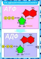 Плакаты Химия клетки, фото 1