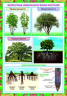 Плакаты Растение живой организм, фото 1