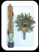Модель «Нейрон»                арт. Ed17644