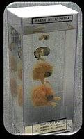 Влажный препарат «Развитие птицы»                арт. Ed17657