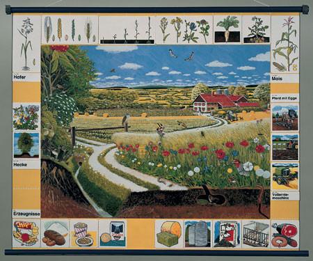 Природное сообщество поля. Магнитный плакат               арт. RN9671