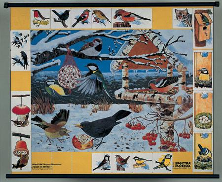 Птицы зимой. Магнитный плакат               арт. RN9673