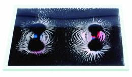Набор «Эксперименты с магнитным полем»               арт. RN9632