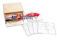 Шкафчик для ботанических рамок-вкладышей и контуров .4 отдела