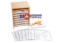Шкафчик для анатомических рамок-вкладышей и контуров 8отделов