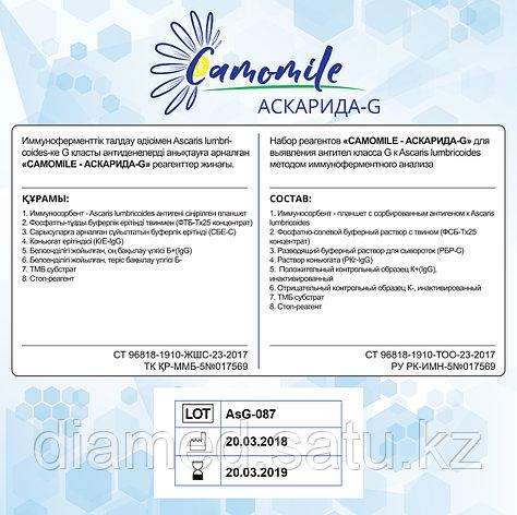 ИФА реагенты CAMOMILE - АСКАРИДА-G, фото 2