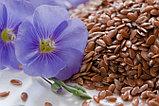 Семена льна 100гр, фото 4
