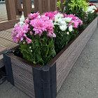 Грядка для цветов, клумбы из ДПК, грядки в теплицах и на участке, фото 2