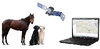 GPS слежение за лошадьми и другими животными