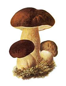 ГРИБНАЯ АПТЕКА (Фунготерапия - лечение грибами)